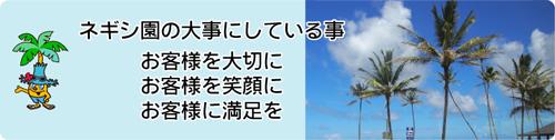 埼玉県羽生市のヤシの木販売・ネギシ園の大事にしている事